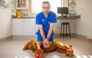 proper dog CPR